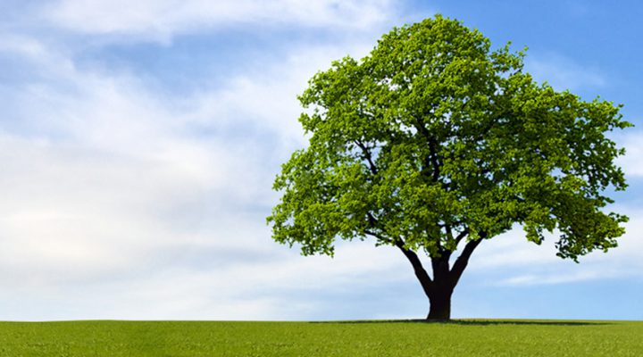 Forum Tree of life - Elancourt